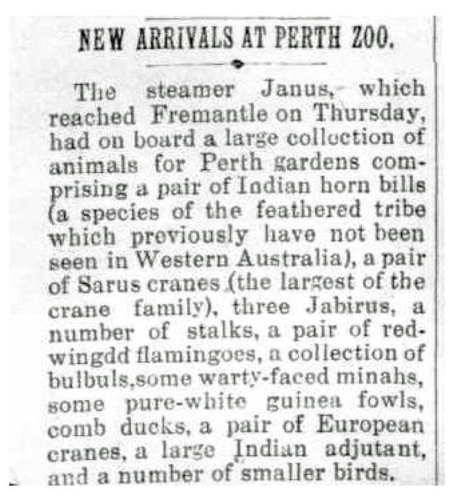NEW ARRIVALS AT PERTH ZOO (1912, January 3), Great Southern Herald, p. 1. Newspaper article found in Trove reproduced courtesy of the National Library of Australia.